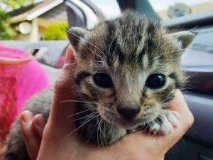cat in hand
