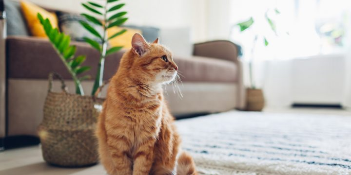 Have a Multiple Cat House? Here's How to Keep it Clean