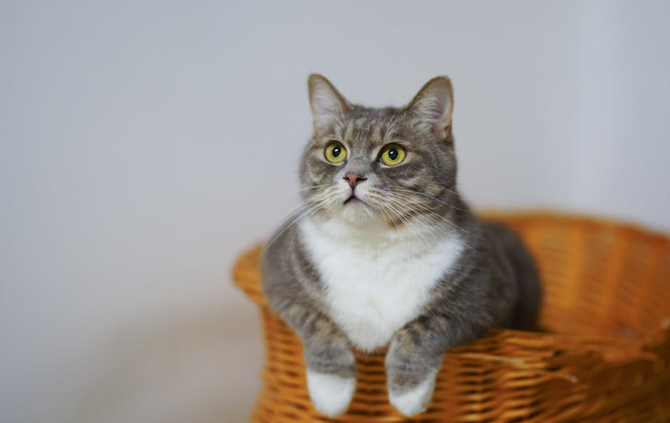 New Pet Owner's Guide: 7 Purrfectly Simple Tips for Training a Cat