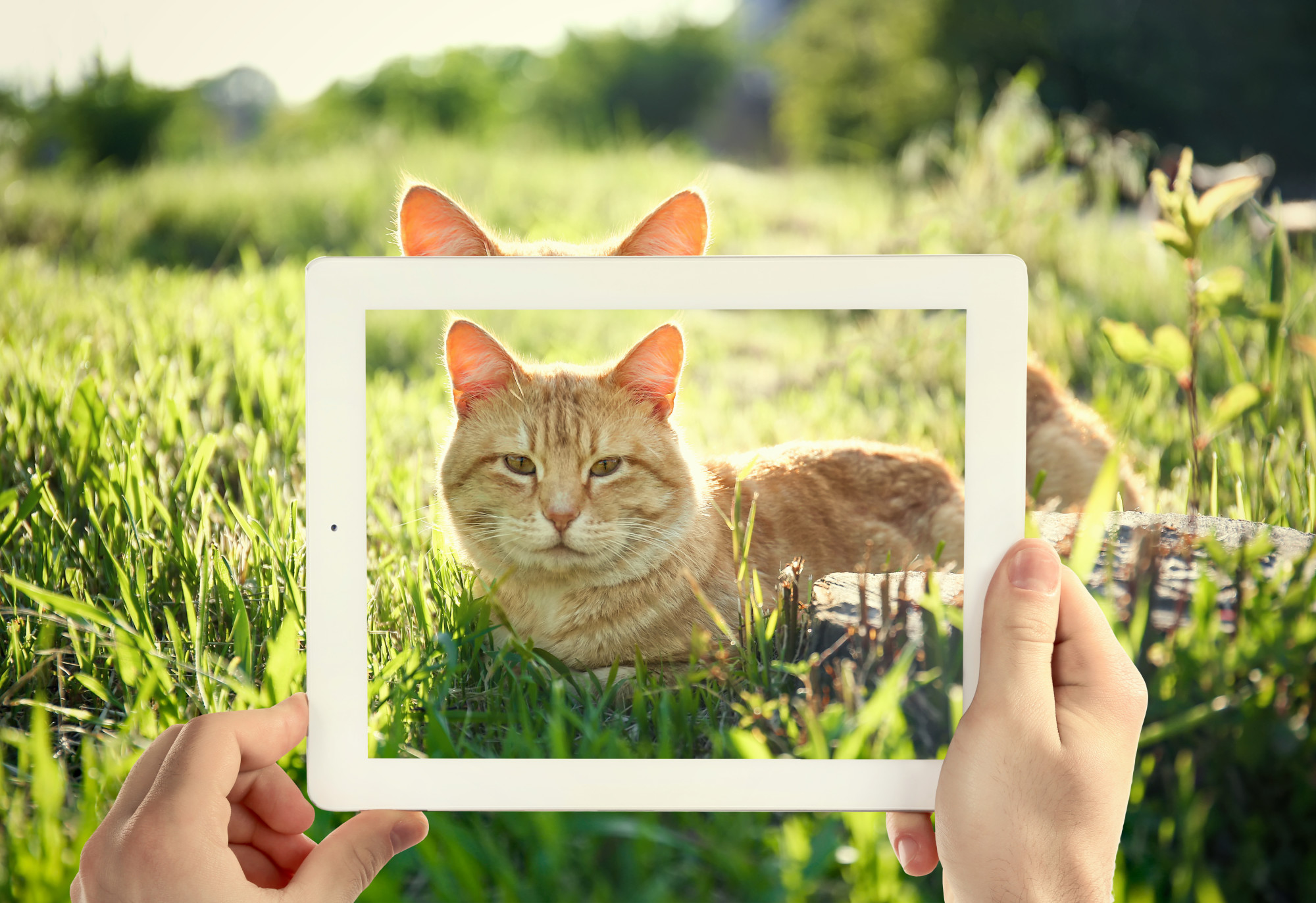 5 Foolproof Tips on How to Click Purrrfect Pet Photos