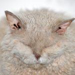 overweight cat