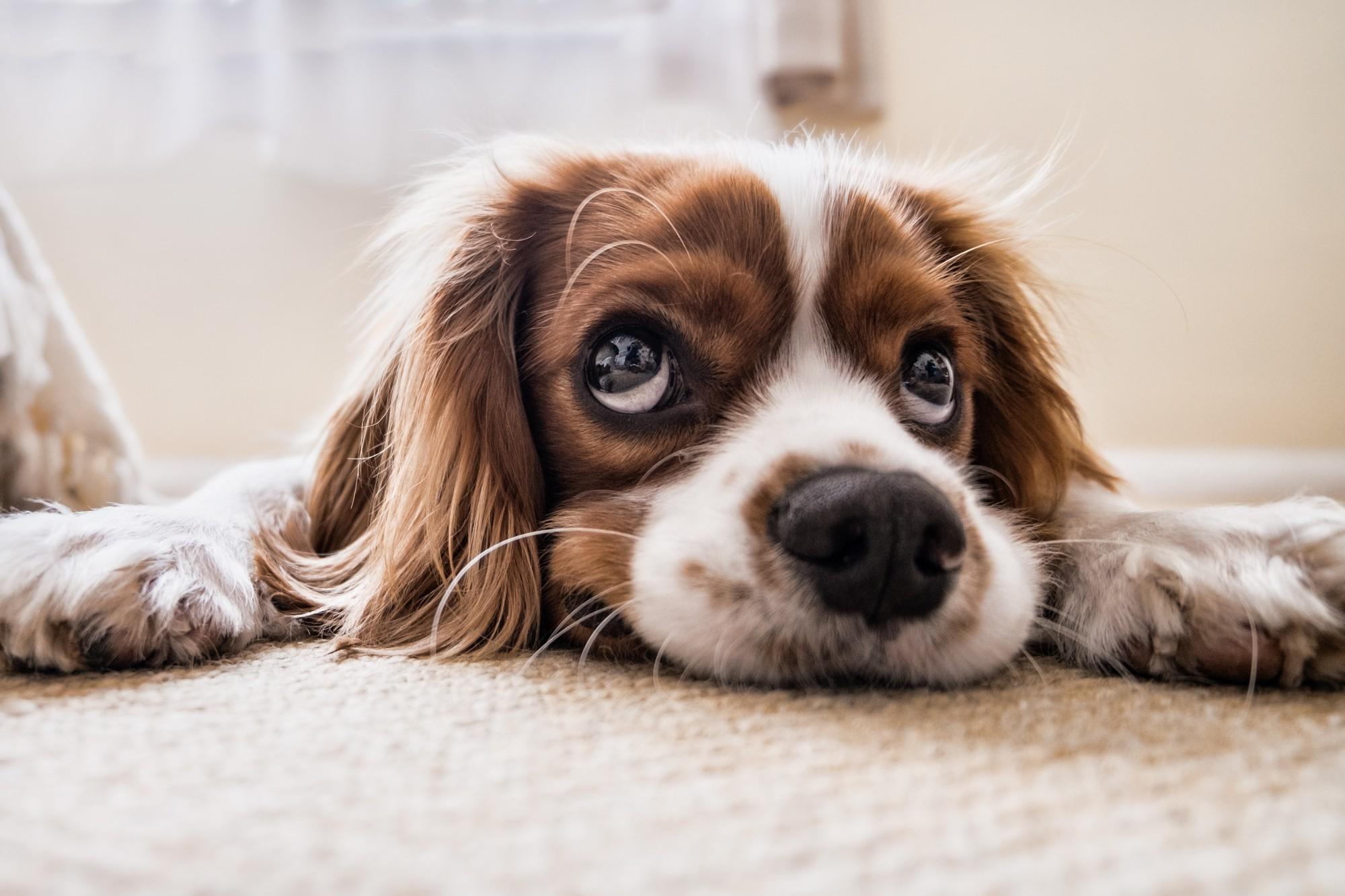 Pet Help: 5 Key Ways to Control Pet Stress and Anxiety