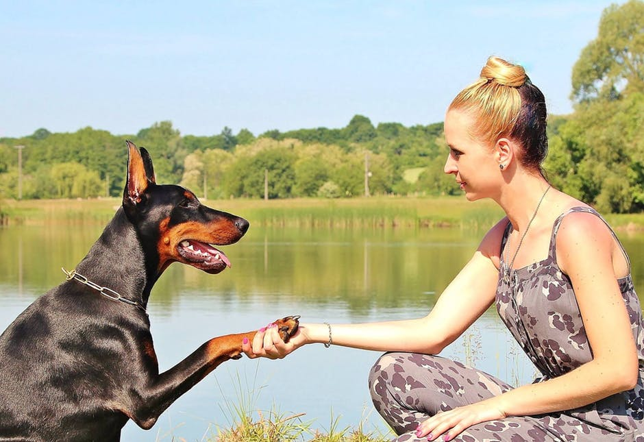 Good Dog! 5 Reasons Why You Should Try Online Dog Training