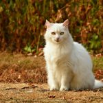 White Cat Sitting on the Ground