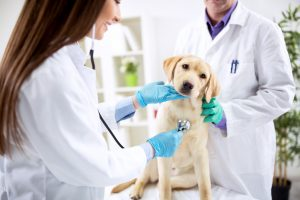Vets Taking Care of a Dog