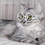Cat Wearing Eyeglasses