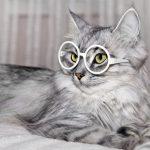 Cat Wearing Eyeglasses