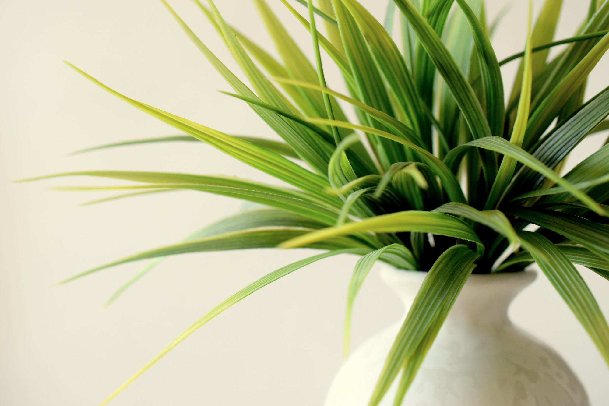 5 Indoor Plants Safe for Cats