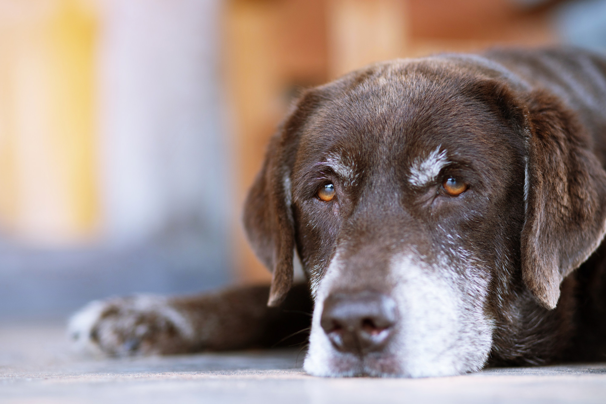 Losing a Pet Suddenly: 7 Steps to Help You Cope Through Grief