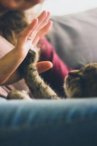 Getting a Cat