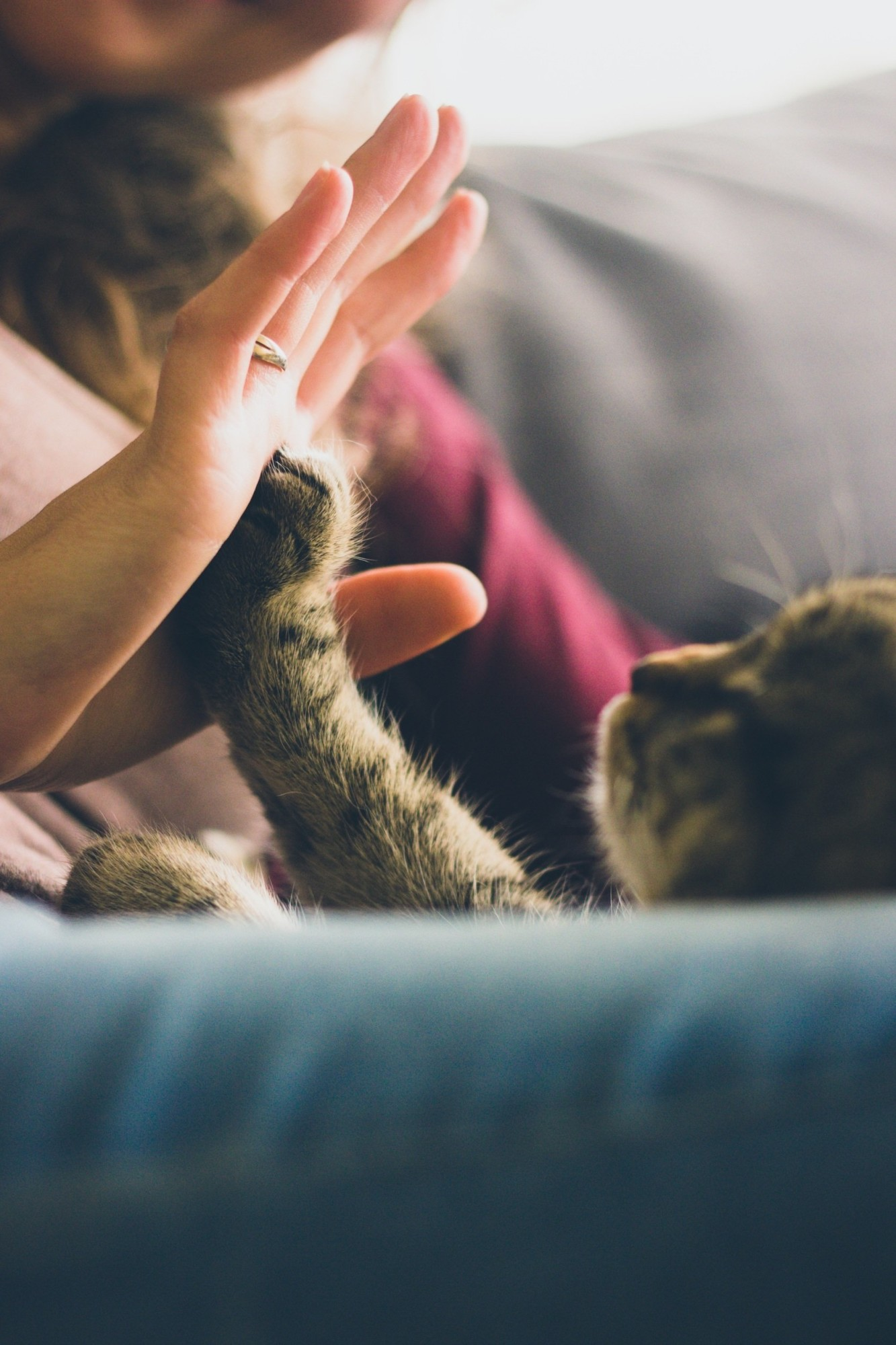 4 Things to Know Before Getting a Cat