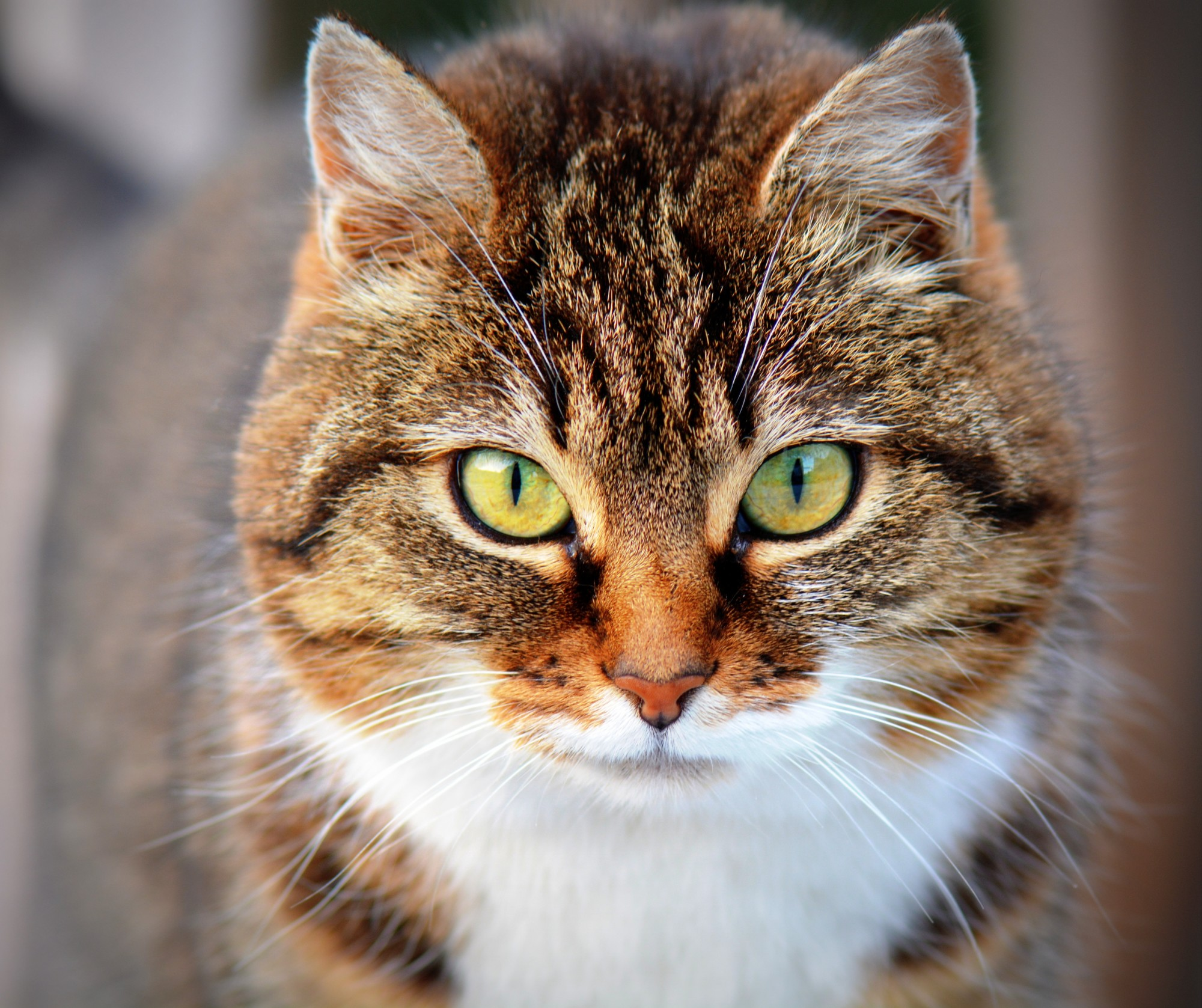 Inside A Feline's Mind: What Do Cats Think When We Kiss Them