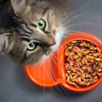 Cat Food Portions