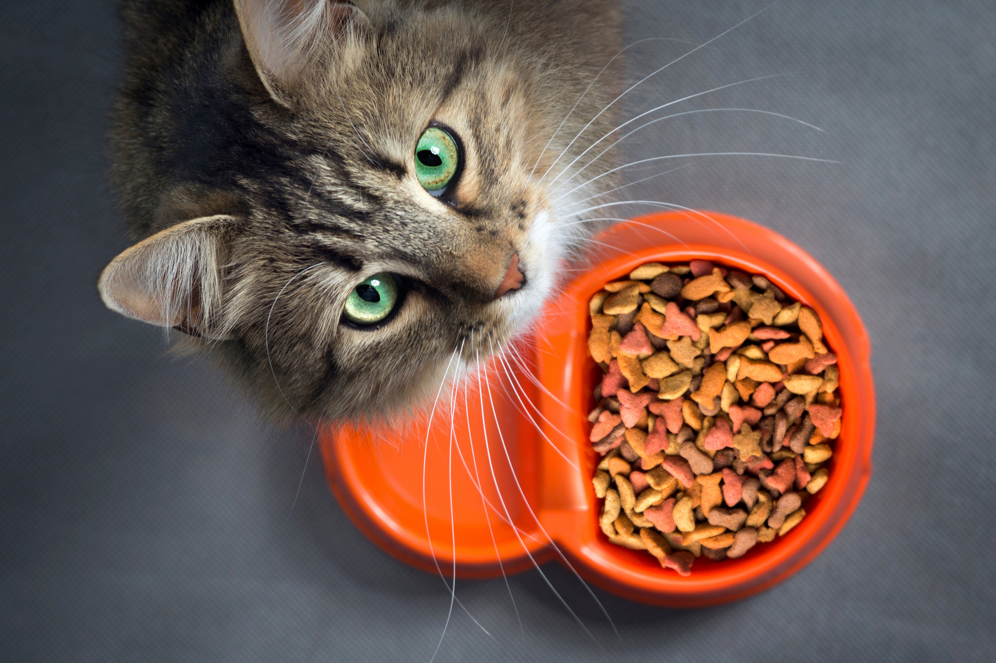 How Much Should You Feed Your Cat? A Guide on Cat Food Portions