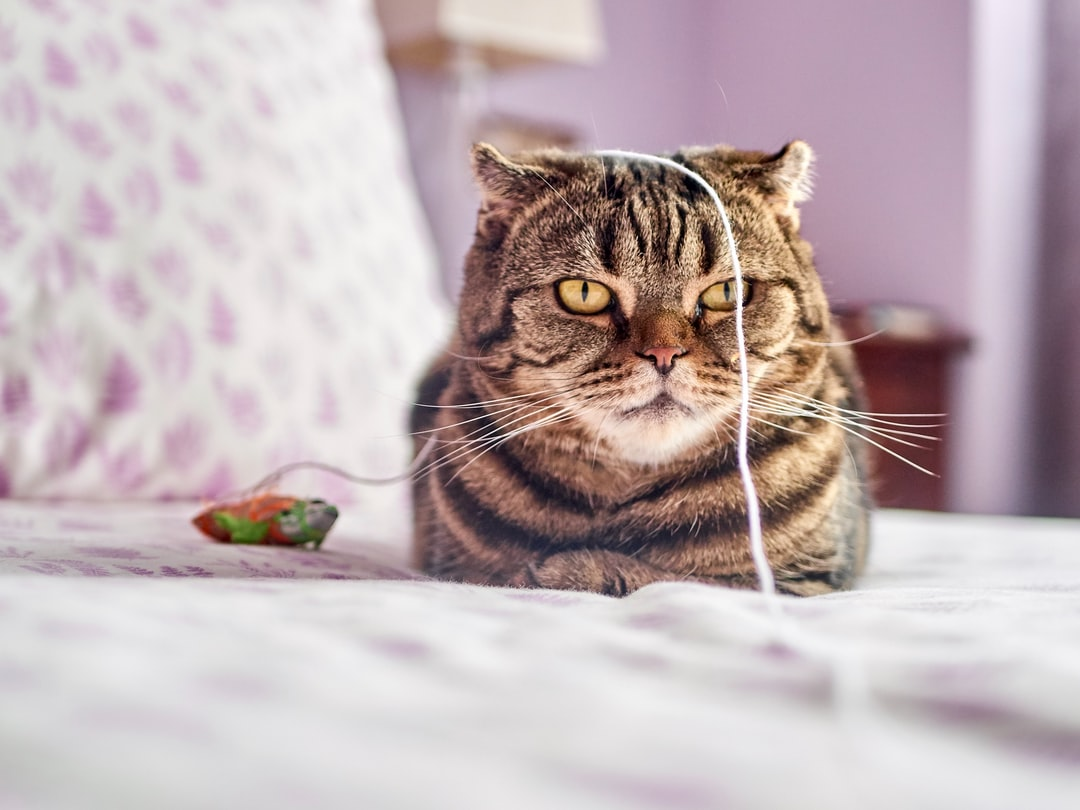 How to Keep Cats Entertained: 5 Pawesome Tips