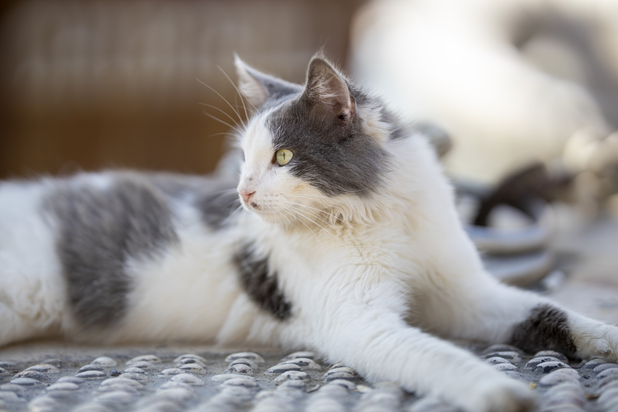 9 Ways to Get Cat Hair Out of Your Carpet