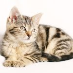Remove Cat Vomit Stains From Carpet
